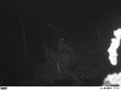 Nocą pod budą, odwiedziny puszczyka XI '13